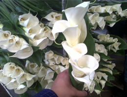 Calla Lilly - Bouquet