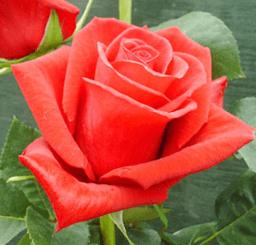 Rose - High & Feeling
