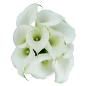 Calla Lilly Mini - White Chrystal