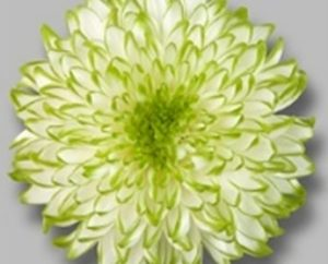 Cremon - Zembla Lime